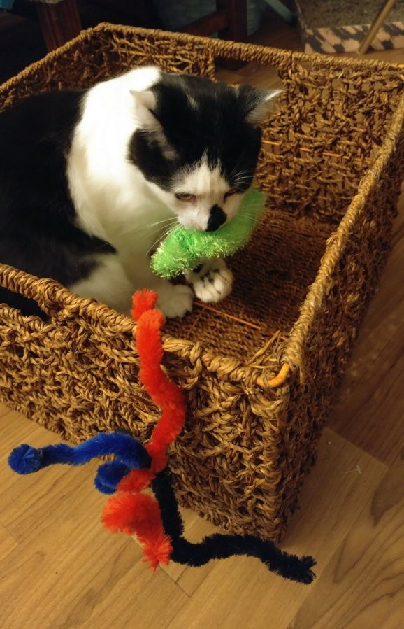 Cheap Cat Toys